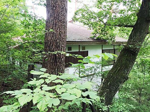 中古一戸建て-北佐久郡軽井沢町大字長倉 ご覧の環境、外観を撮影しても緑にブロックされます。