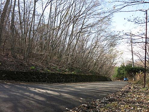 土地-北佐久郡軽井沢町大字長倉鶴溜 たくさんの樹木が生い茂り、緑に包まれた環境となります。