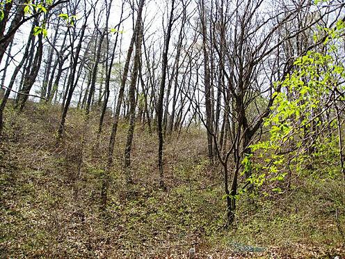 土地-北佐久郡軽井沢町大字長倉千ケ滝西区 敷地の中にはたくさんの木々があります。お好きな木を残し建築するのが良さそうです。