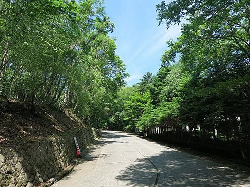 土地-北佐久郡軽井沢町大字軽井沢 木立の前面道路は軽井沢らしい趣があります。サイクリングや散策に最適です。