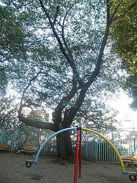 マンション(建物全部)-文京区本駒込5丁目 公園神明北公園まで171m