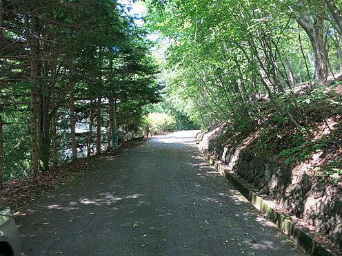 土地-北佐久郡軽井沢町大字軽井沢 木漏れ日が差し込み、気持ちの良い前面道路です。