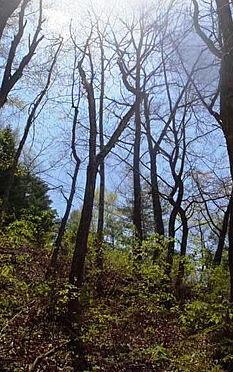 土地-北佐久郡軽井沢町大字長倉鶴溜 雰囲気が良い木々が立ち並びます。