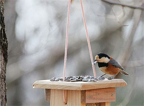 中古一戸建て-北佐久郡軽井沢町大字長倉 これだけの環境、野鳥が来ないわけがありません。