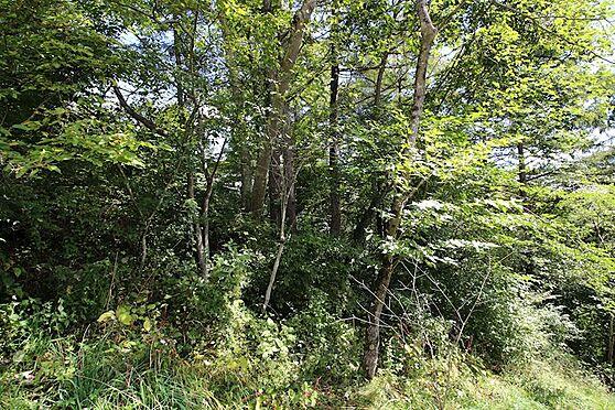土地-北佐久郡軽井沢町大字軽井沢旧軽井沢 プライバシーを保ちながら優雅な別荘ライフを満喫できる敷地です。