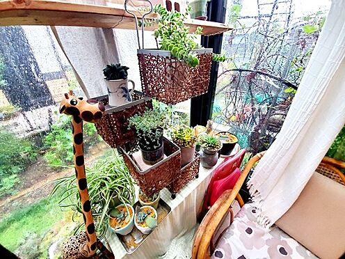 中古一戸建て-日野市大字川辺堀之内 植物鑑賞も楽しめるサンルーム♪