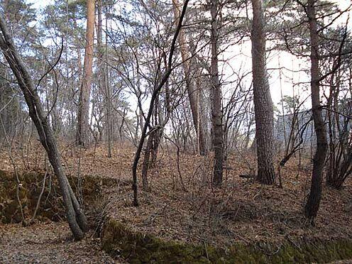 土地-北佐久郡軽井沢町大字長倉 木々に囲まれひっそりとした隠れ家的立地。時間を愉しむ憩いのひとときをお求めの方に・・