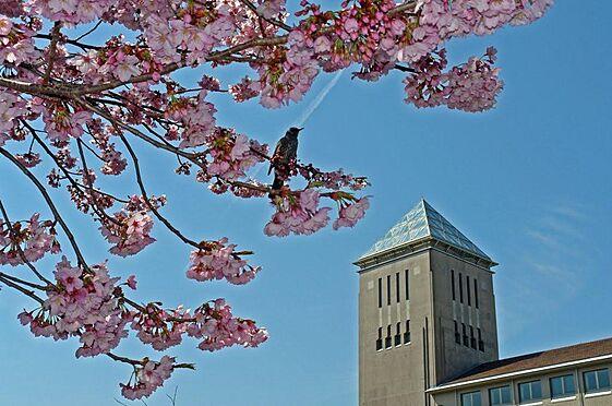 アパート-八王子市南大沢2丁目 首都大学東京
