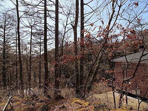 土地-北佐久郡軽井沢町大字軽井沢旧軽井沢 南西側への眺望です。