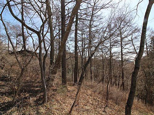 土地-北佐久郡軽井沢町大字軽井沢旧軽井沢 東側方向への眺望