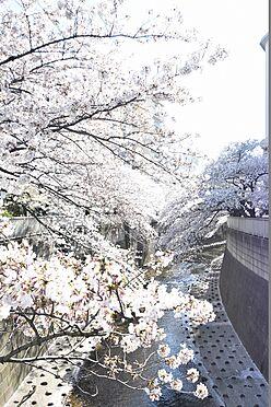 アパート-新宿区北新宿4丁目 一級河川 神田川…徒歩4分(約270m)