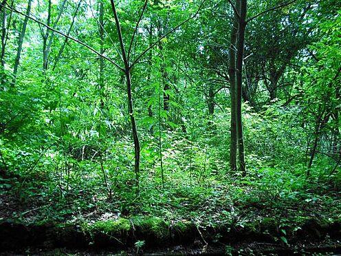 土地-北佐久郡軽井沢町大字長倉 今は手を入れていないので雑草が生えていますが、平坦な部分もあります。