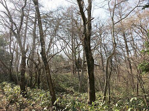 土地-北佐久郡軽井沢町大字長倉 敷地内には大きな樹木がそびえたっています。