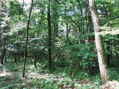 土地-北佐久郡軽井沢町大字長倉 緑に囲まれた環境を求めて軽井沢へ来るのが目的ですよね。