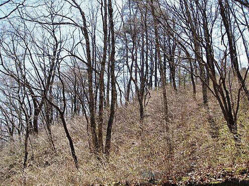 土地-北佐久郡軽井沢町大字長倉千ケ滝西区 人気の千ヶ滝西区に約236坪の土地です。