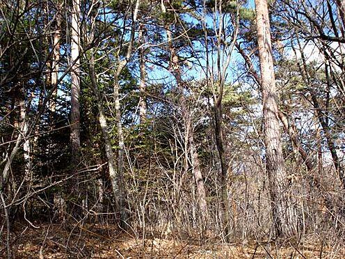 土地-北佐久郡軽井沢町大字長倉 これだけの自然に囲まれながらも最寄り駅まで約5.2km(車約8分)。利便性も良好なんです。