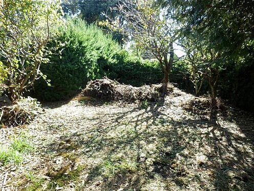 中古一戸建て-伊東市八幡野 柑橘類が植えられているお庭