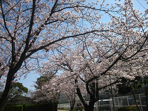 中古マンション-千葉市美浜区高洲3丁目 四季を楽しめる敷地です!