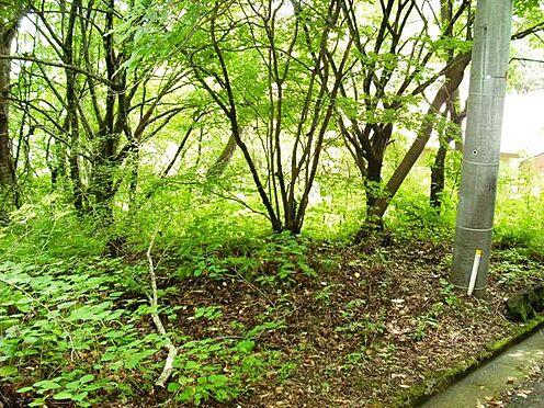 土地-北佐久郡軽井沢町大字長倉 敷地の中には広葉樹がほとんどです、秋の紅葉が楽しみですね。