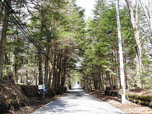 土地-北佐久郡軽井沢町大字長倉千ケ滝西区 木立のアーケードを通り現地へ。とても雰囲気の良い道路ですね。
