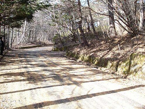 土地-北佐久郡軽井沢町大字長倉 木立のトンネルを抜けて現地へ到着。どのような建築をしましょうか。夢が広がりますね。