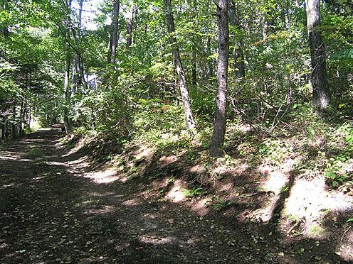 土地-北佐久郡軽井沢町大字長倉鶴溜 南西側接道の様子。都会の喧騒から逃れ、たくさんの木々に囲まれて癒しの空間でくつろぐ・・・