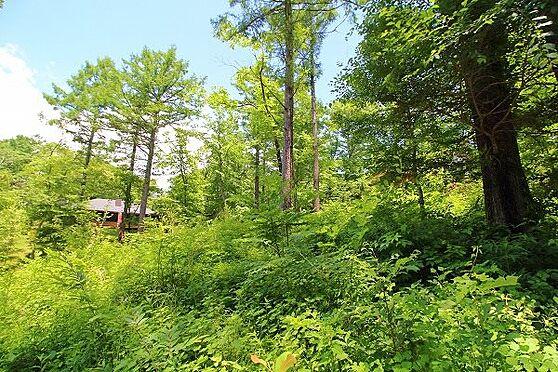 土地-北佐久郡軽井沢町大字長倉 青空から降り注ぐ日差しと、軽井沢の凛とした爽やかな空気を現地で感じてみてください。