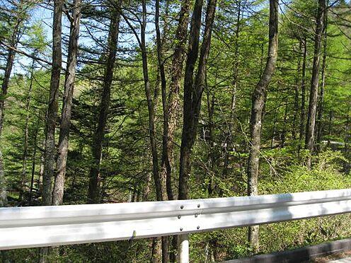 土地-北佐久郡軽井沢町大字軽井沢 前面道路は綺麗に舗装されており国道18号へのアクセスも良好です