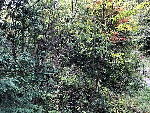 土地-豊田市花沢町小豆畑 澄んだ空気、豊かな緑の中で子育てをしよう
