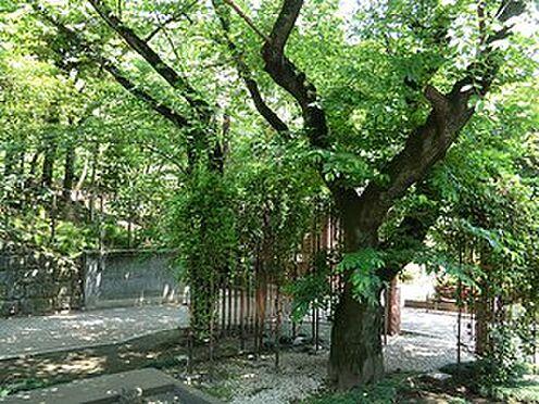 中古マンション-港区赤坂8丁目 周辺環境:乃木公園