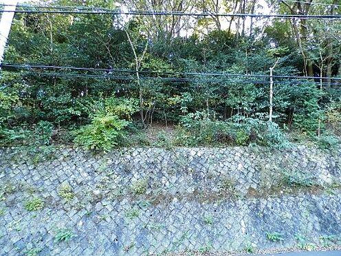 土地-熱海市泉元宮上分 原生もそのままに、色濃く自然が残った環境です。しかしこの南西側には家屋を建てられた方もいらっしゃいま
