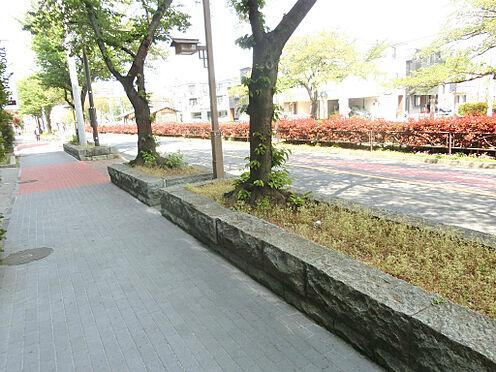 マンション(建物一部)-葛飾区亀有4丁目 前面道路は綺麗な並木道です。