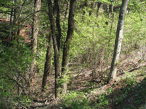 土地-北佐久郡軽井沢町大字軽井沢 敷地内の樹木を伐採することで浅間山が望めます