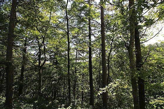 土地-北佐久郡軽井沢町大字軽井沢旧軽井沢 適度に木立を伐採してバランスよく建築を。