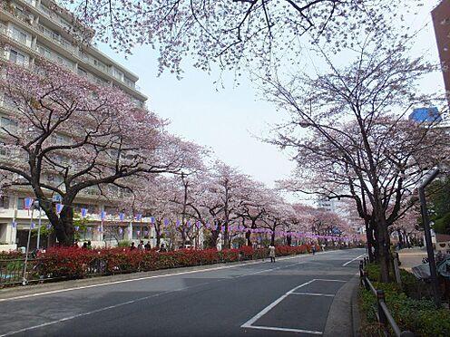 区分マンション-文京区白山2丁目 春には桜が咲き誇る播磨坂さくら並木まで徒歩15分(約1160メートル)