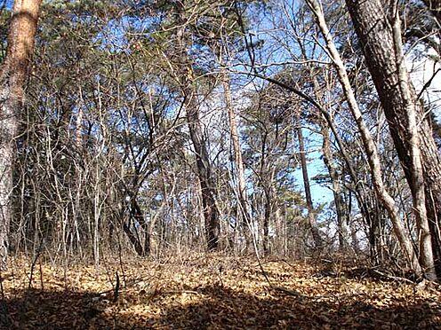 土地-北佐久郡軽井沢町大字長倉 傾斜も緩やかな約412坪。この時期は満天の星空で、天体ファンにも喜んでいただけそう。