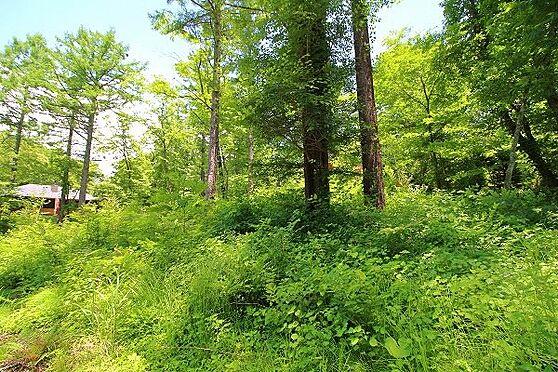 土地-北佐久郡軽井沢町大字長倉 南北に長い敷地。広いお庭や車寄せなどいかがでしょうか。