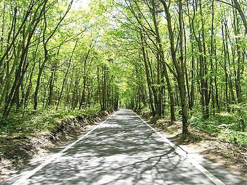 土地-北佐久郡軽井沢町大字長倉 1000m林道まで約1km(車で約1分)木漏れ日が美しくドライブが気持ち良いです。
