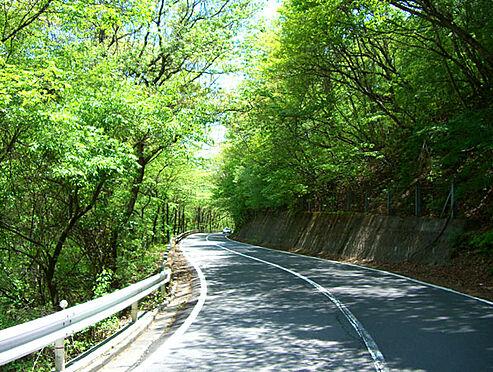 土地-北佐久郡軽井沢町大字長倉 緑のトンネル国道146号線を通って現地に向かいます。