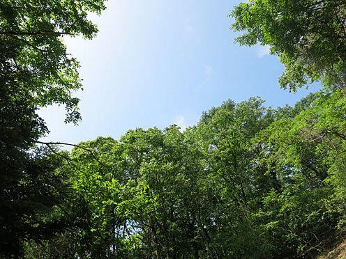 土地-北佐久郡軽井沢町大字軽井沢 これだけの自然溢れる環境でありながら中軽井沢駅まで車で約6分(約3km)