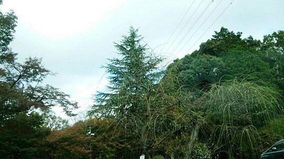 戸建賃貸-岡崎市細川町字鳥ケ根 第2号天神山緑地2886m