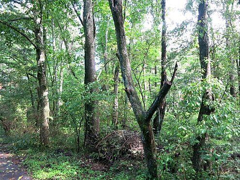 土地-北佐久郡軽井沢町大字長倉 小さな雑木を綺麗にして大きな木々を残してみるのが良さそうです。