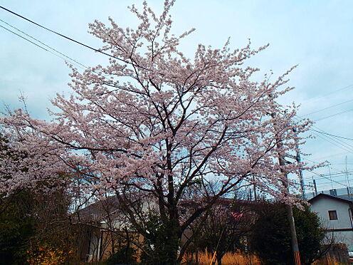 土地-八幡市橋本栗ケ谷 お部屋からの眺望:2019年4月撮影