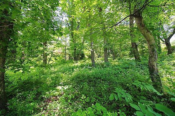 土地-北佐久郡軽井沢町大字長倉 千ケ滝西区。約336坪のゆとりある敷地。