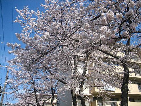 区分マンション-千葉市美浜区稲毛海岸3丁目 敷地内でも季節を楽しめます!