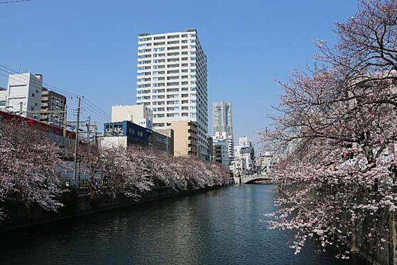 中古マンション-横浜市中区日ノ出町1丁目 目の前を川が流れ、川沿いには立派な桜並木が。大変贅沢で優美な景色をご覧になりながら生活を送ることができ、自然と調和した幸福な生活を感じられます。
