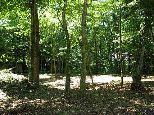 土地-北佐久郡軽井沢町大字長倉 敷地内には雰囲気の良い木立があります。木漏れ日が気持ち良さそうです。