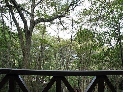 中古一戸建て-北佐久郡軽井沢町大字長倉 ウッドデッキからの眺望の様子です。シーズン中は溢れる緑が広がります。