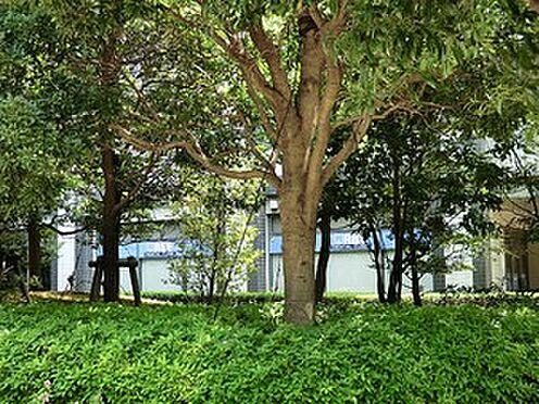 中古マンション-港区芝公園1丁目 周辺環境:新東京クリニック