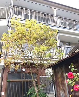 アパート-大阪市生野区桃谷3丁目 外観